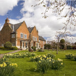 Manor House Daffs -1(500)
